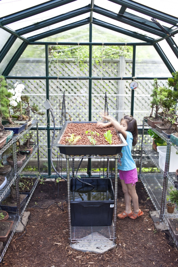 Backyard Aquaponics Greenhouse : Backyard Aquaponics ? FreestyleFarm