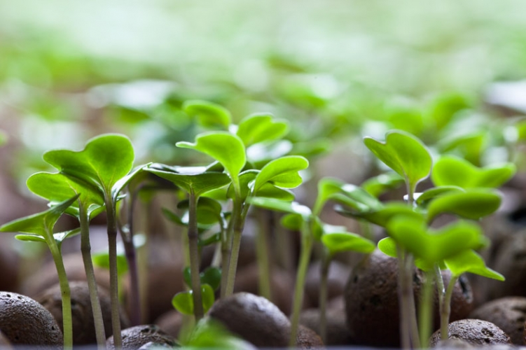 Grow Your Own Microgreens Amp Sprouts 187 Freestylefarm