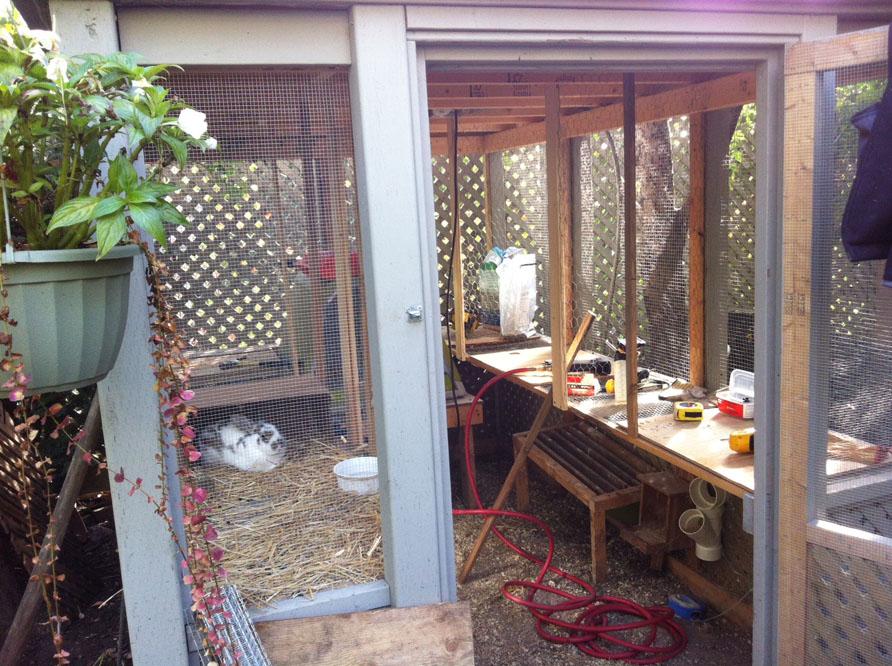 Raising Backyard Quails » FreestyleFarm