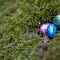 Easter egg hunt with PIGS!