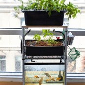 Build you own mini aquaponic system and grow leafy greens and herbs all year round.